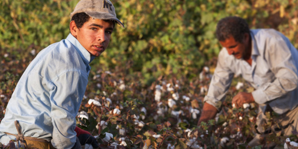 FONDAZIONE CON IL SUD – Contributo a fondo perduto per il contrasto dello sfruttamento dei lavoratori stranieri