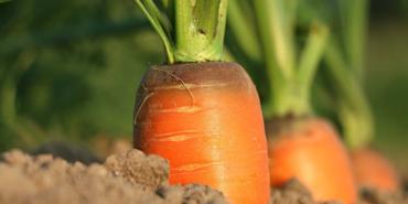 Fondo per la ricerca nel settore dell'agricoltura biologica e di qualità
